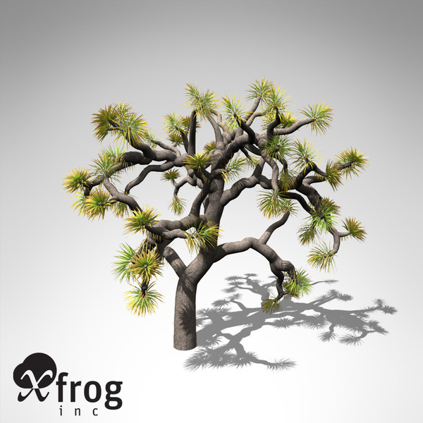 joshua tree plant 3d model - XfrogPlants Joshua Tree... by xfrog