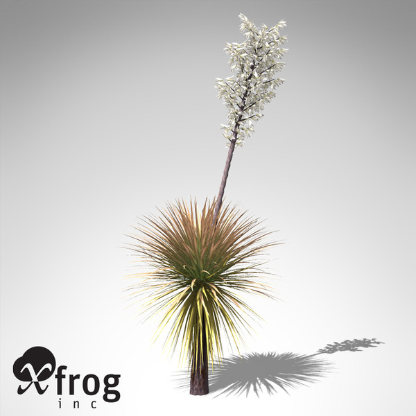 soaptree yucca plant 3d model - XfrogPlants Soaptree Yucca... by xfrog