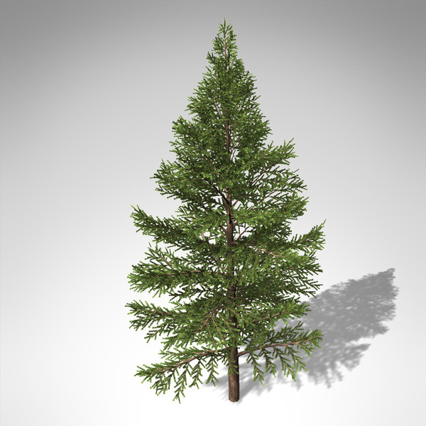 xfrogplants subalpine fir tree max - XfrogPlants Subalpine Fir... by xfrog
