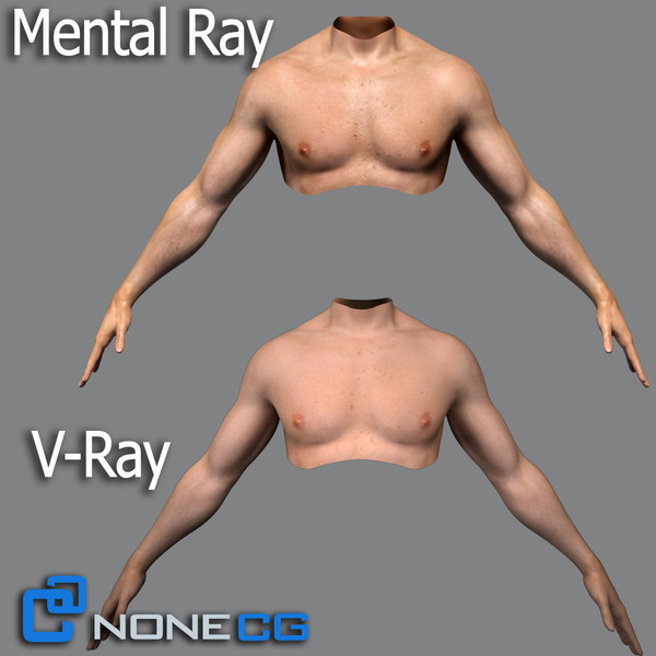 realistic male torso rigged man 3d max - Adult Male Torso Rigged... by NONECG