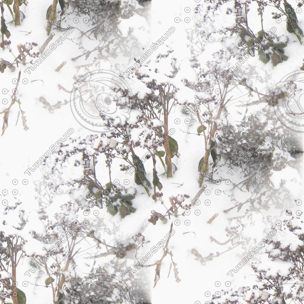 dried flowers in the snow - melancholic winter