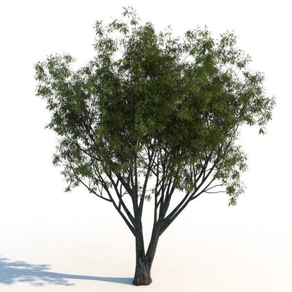 3d model willow tree - Willow trees... by exactness