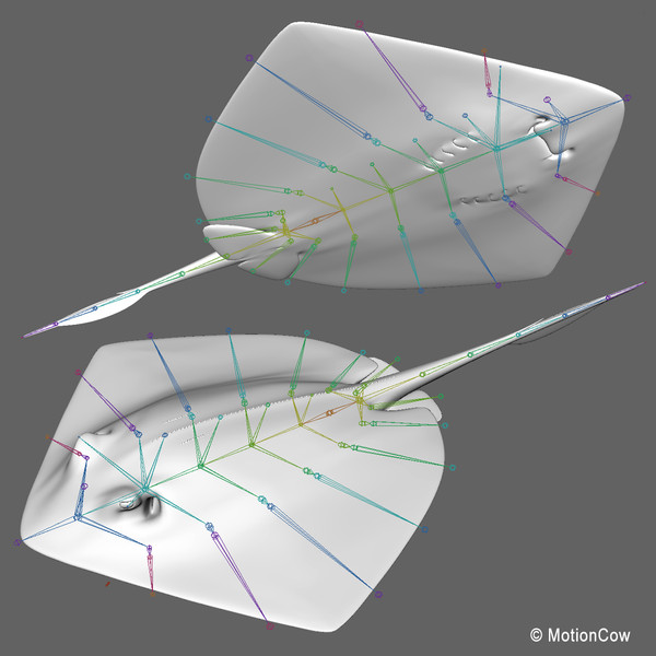 realistic stingray 3d c4d - Stingray... by MotionCow
