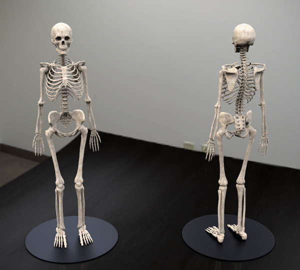 3ds skeleton zbrush 4 - Skeleton... by Leppee