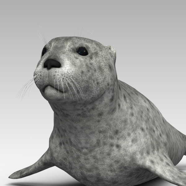 3d harbor sea seal model - Harbor Seal... by 3d_Wanderer