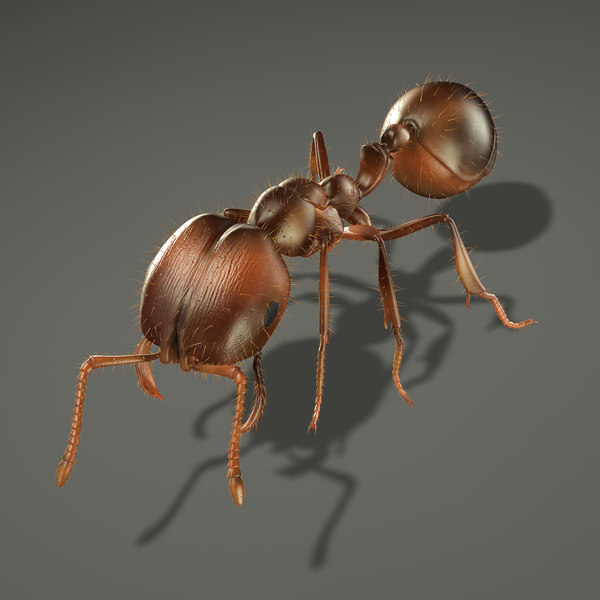 Fire Ant (RIGGED) 3D Models