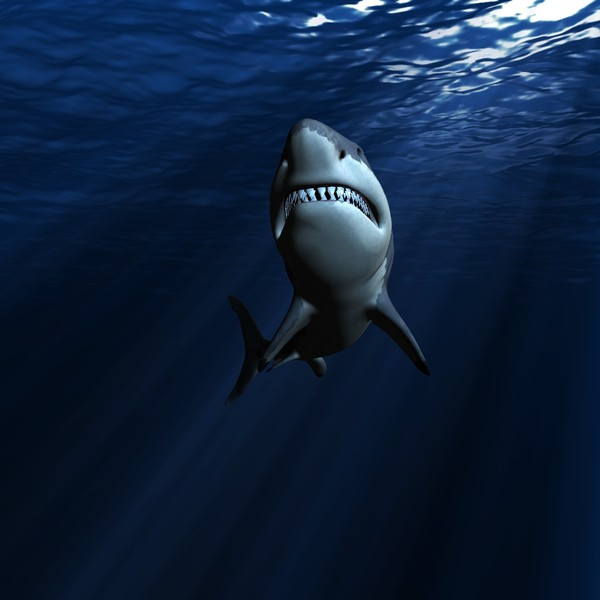 great white shark c4d - WHITE SHARK... by NGC4051