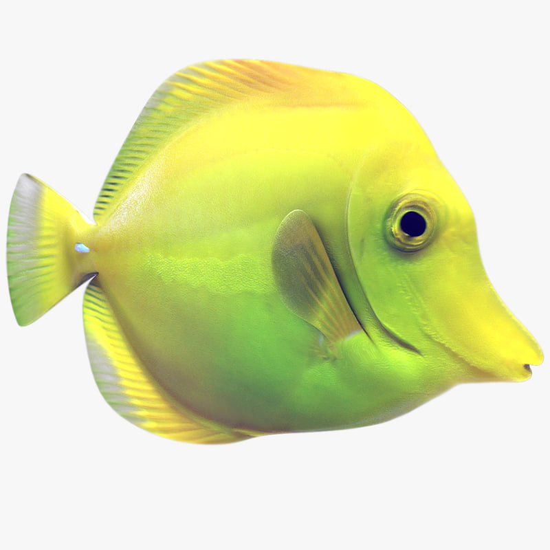 3ds max yellow tang tropical fish for Yellow tropical fish