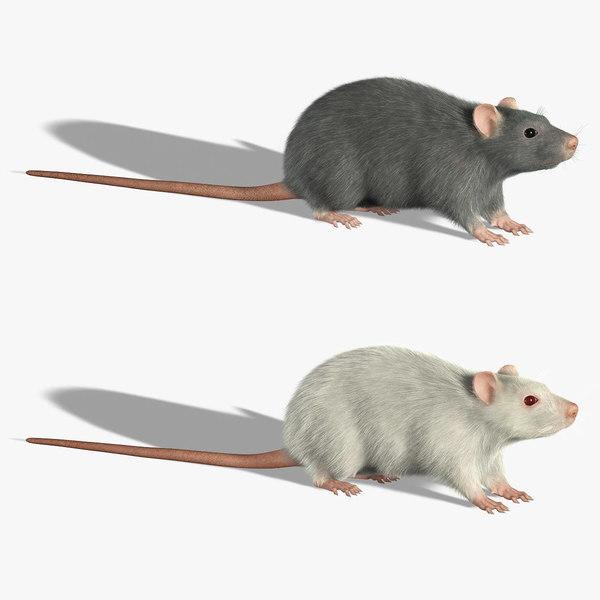 Rats (FUR) 3D Models