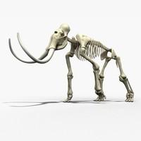 animal anatomy 3D models