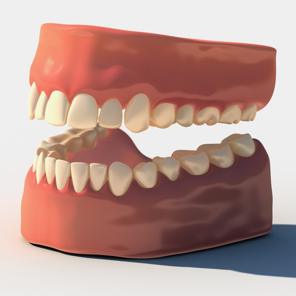Teeth with gums 3D Models