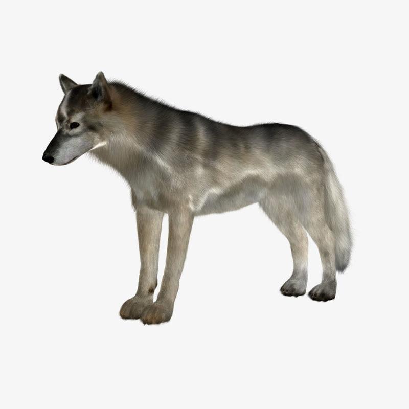 wolf_white.jpg