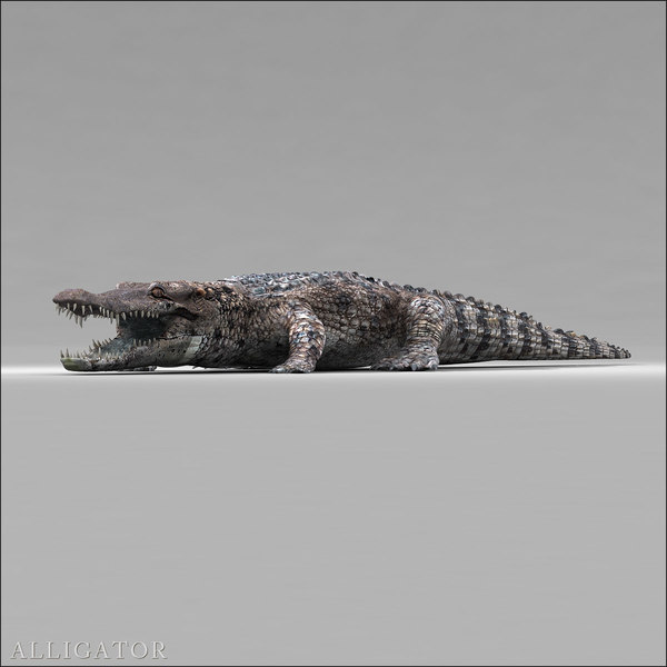 Alligator 3D Models