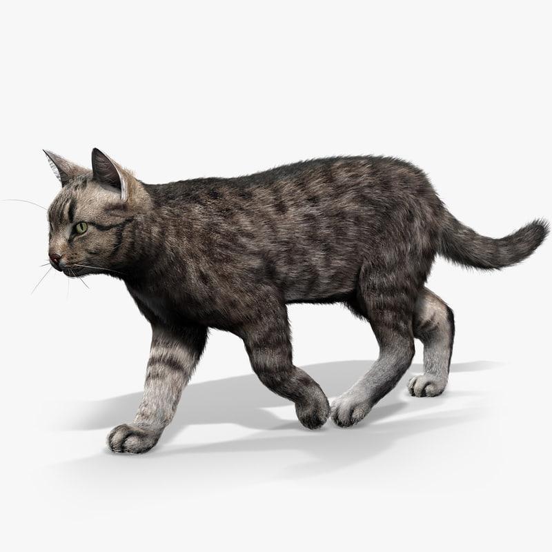 catSignature.jpg