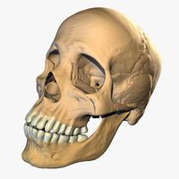 skull 3d models