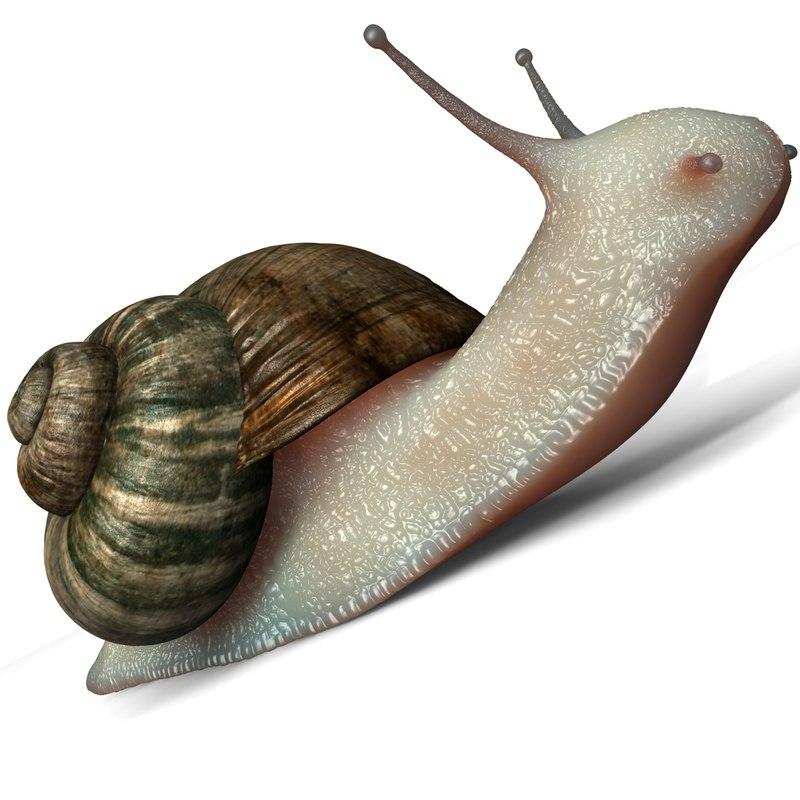 Snail_01.jpg