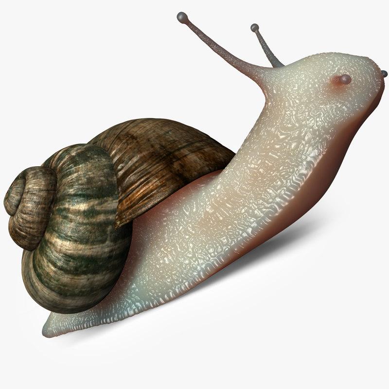 Snail_01b.jpg