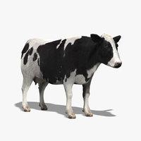 cow 3d models