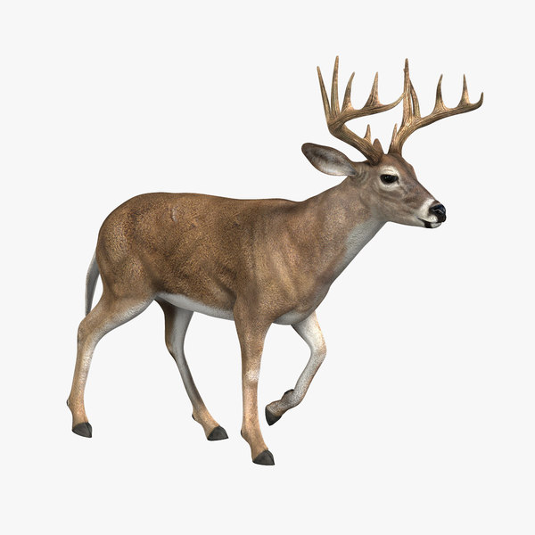 Deer (ANIMATED) 3D Models