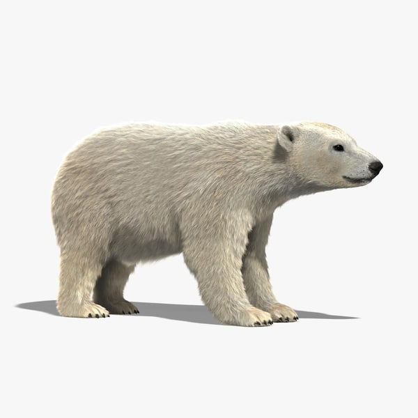 Polar Bear (FUR) 3D Models