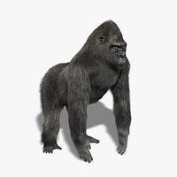 primates 3d models