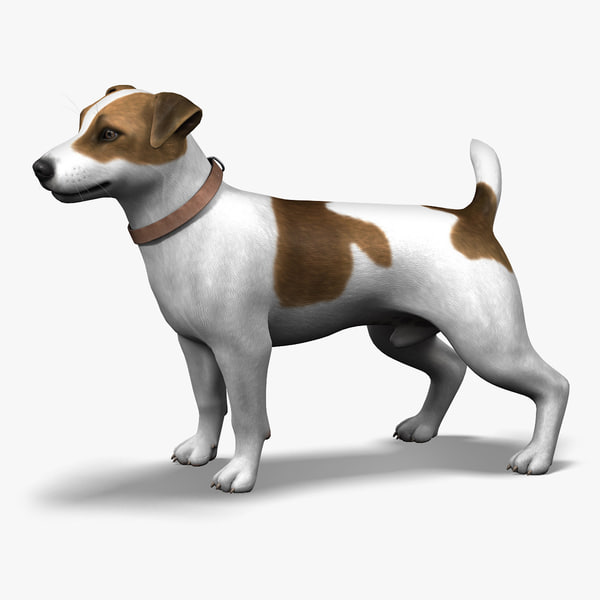 Dog,  Jack Russell Terrier, Fur 3D Models