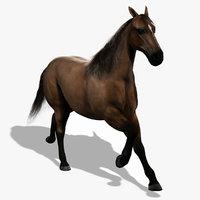 horse 3d models