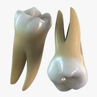 molar 3D models