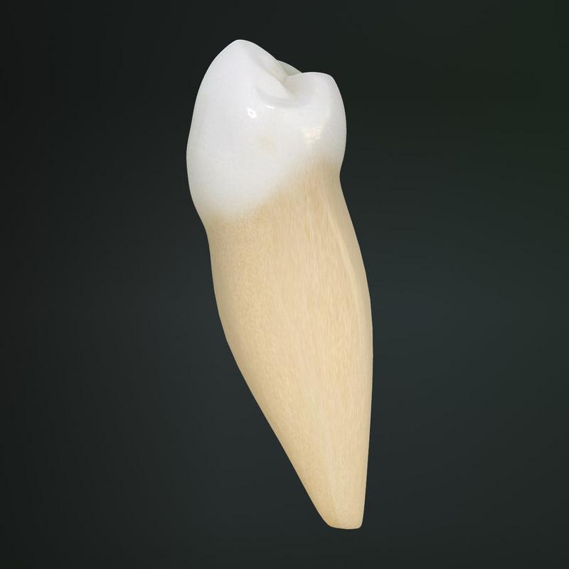 Lower First Premolar