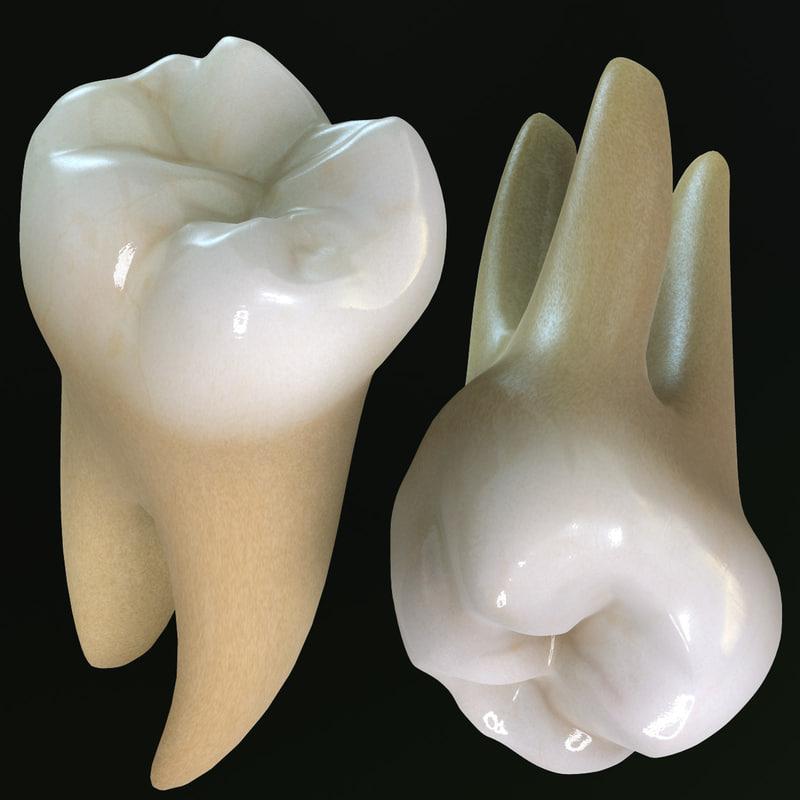 Second Molars
