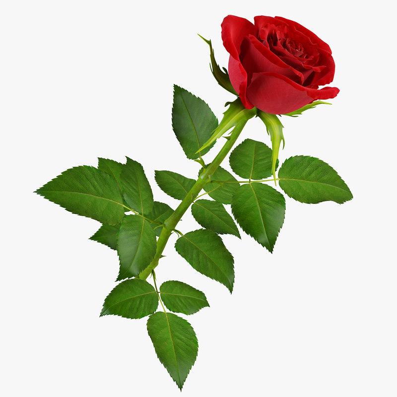 rose9_2_pr.jpg
