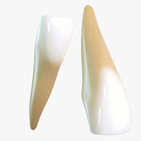 incisor 3D models