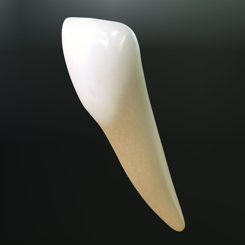 Lower Lateral Incisor