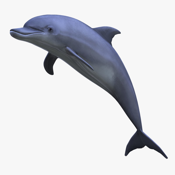 Dolphin 3D Models