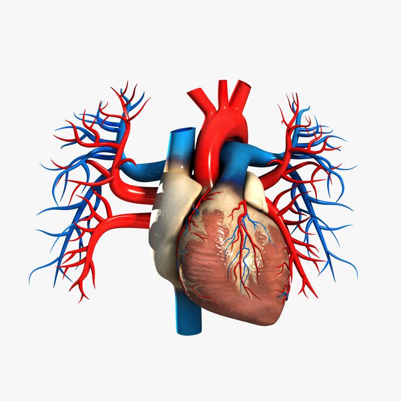 Heart_Turbosquid.jpg