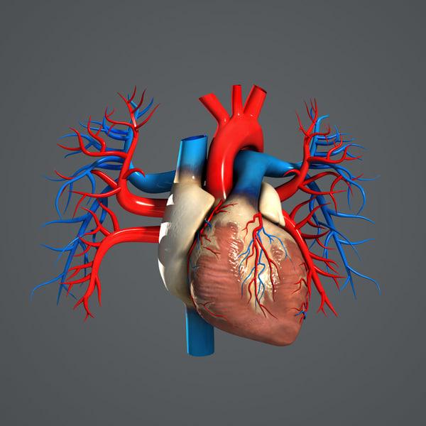 Human Heart (Textured) 3D Model 3D Models