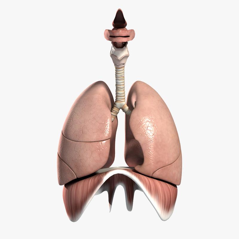 Respiratory_Turbosquid.jpg