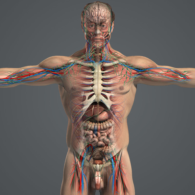 Male_Anatomy_Complete_01.jpg