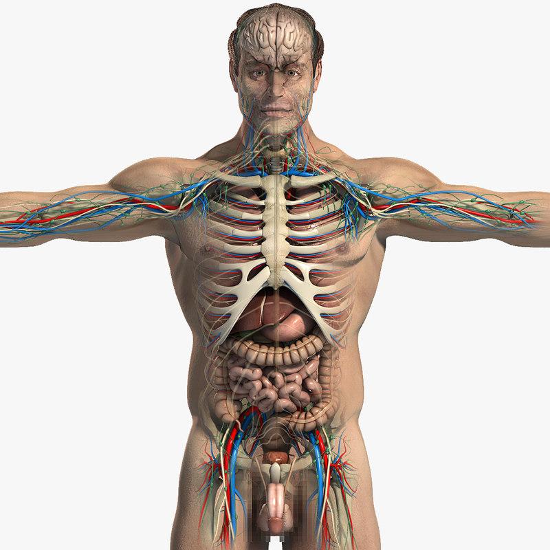 Male_Anatomy_Essentials_CM_01.jpg