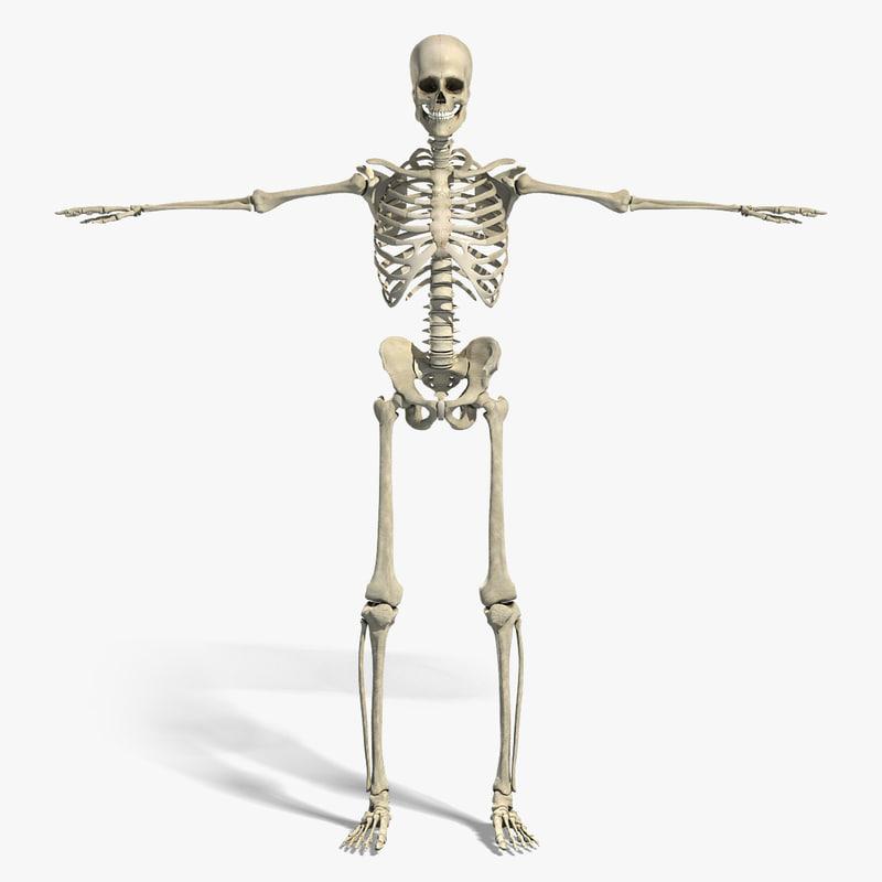 Skeleton_Turbosquid.jpg
