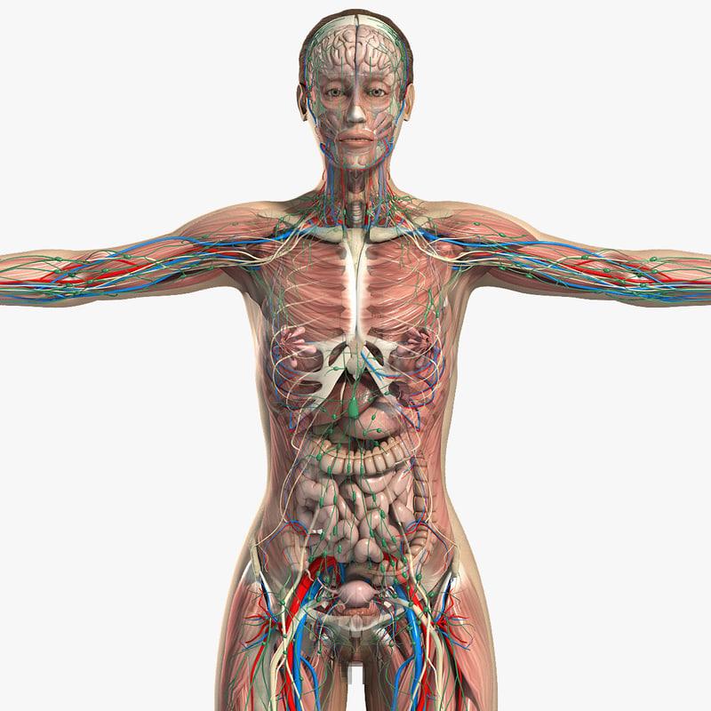Female_Anatomy_Complete_CM_01.jpg