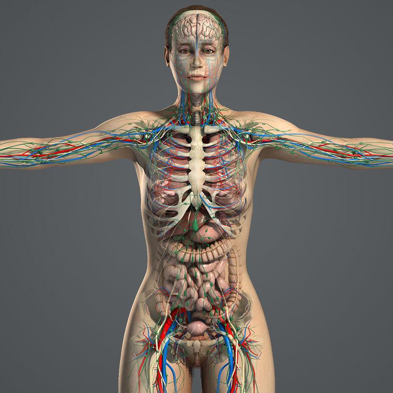 Female_Anatomy_Essentials_01.jpg