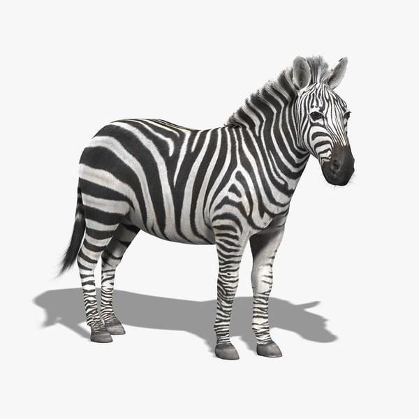 Zebra (FUR) 3D Models
