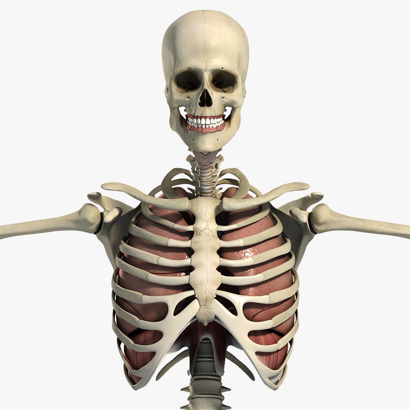 Male_Respiratory_Skeletal_CM_01.jpg