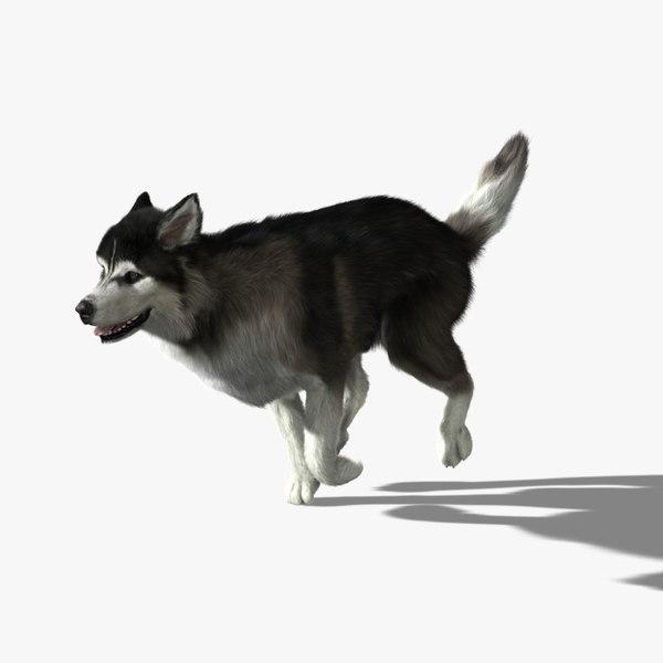 Siberian Husky (FUR) (ANIMATED) 3D Models