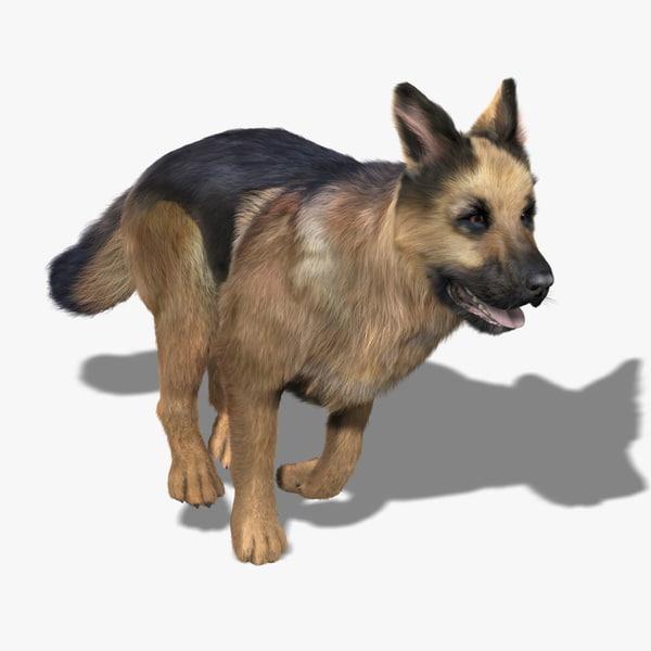 German Shepherd (FUR) (ANIMATED) 3D Models