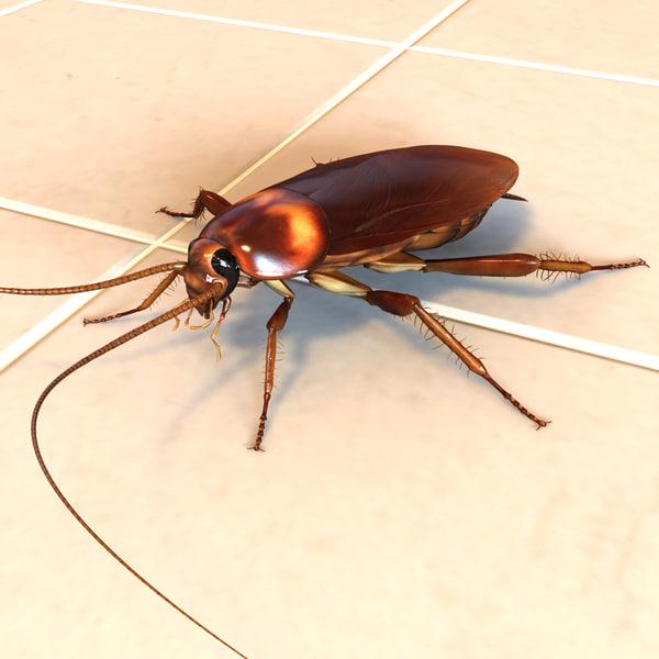 American Cockroach - Periplaneta Americana 3D Models