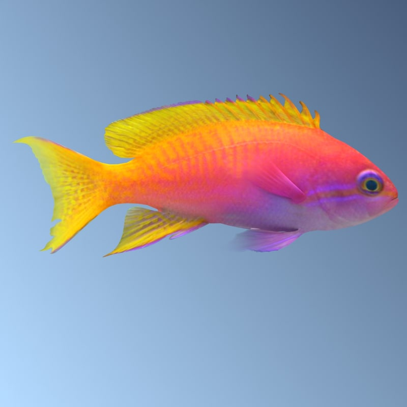 anthias1sb.jpg