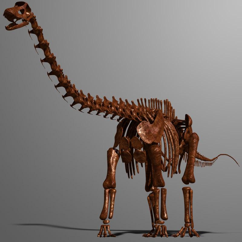 3d dino skeleton diplodocus bones - Dinosaure diplodocus ...