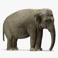 elephant 3d models